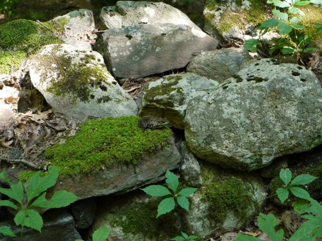 Moss-Rocks-Little-Japanese-Gardens.jpg